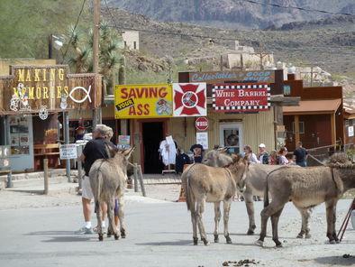 oatman-burros