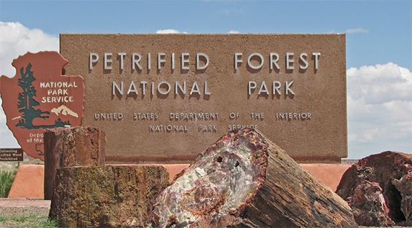 petrified-forest1